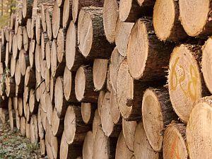 GroenLinks: stop stoken biomassa en plant bomen!