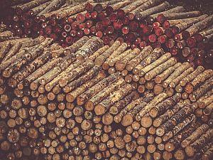 Biomassa gaat eruit. Maar wat komt dan in de plaats?