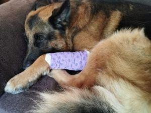 Hond en baasje aangevallen in Wijkpark Holy