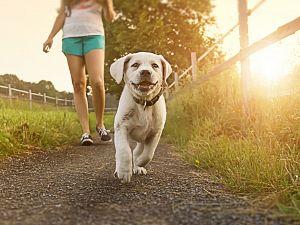 Walk the Dog Walk gecanceld
