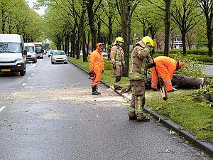 Verkeer Holysingel loopt vast door omgewaaide boom