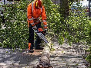 Omgewaaide boom blokkeert Paulus Buysstraat