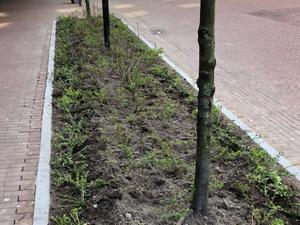 Groen in de binnenstad