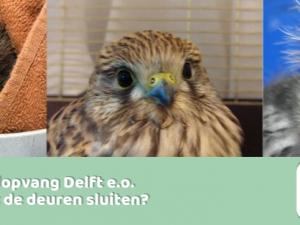 Faillissement Wildopvang Delft zou slecht zijn voor dieren in Maassluis