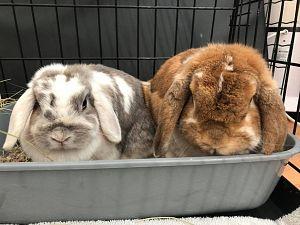 Tamme konijnen gedumpt aan de Zuidbuurt