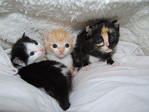 Drie kittens gevonden in een weiland in Maasland