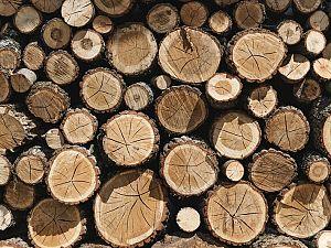 ChristenUnie: 'Bomen ten onrechte gekapt'