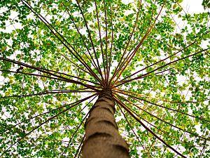Een-en tweejarige bomen krijgen extra water