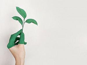 Geen duurzaamheidsraad Maassluis, GroenLinks 'verbijsterd'