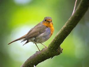 Samen vogels tellen in het Duurzaamheidscentrum