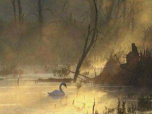 Foto Meuldijk in boek Wereld Natuur Fonds