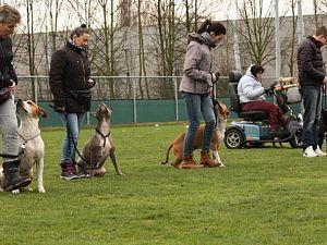 Hondenschool vreest bijtincidenten