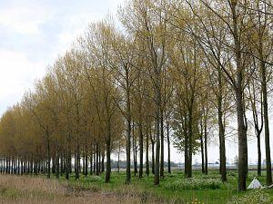 Bomenkap Kraaiennest voorlopig van de baan