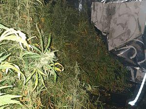 Weedplantage opgerold aan Fahrenheitstraat