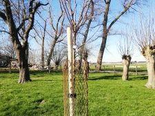 Honderd nieuwe fruitbomen in Midden-Delfland