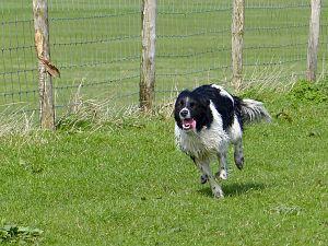 Boeren vragen: 'Houdt u uw hond aan de lijn?'