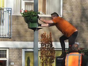 Bloemenpracht in Groenoord