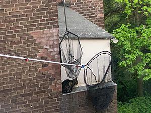 Kat na 7 dagen gered van dakrand