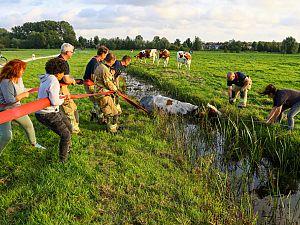 Stoeipartij eindigt voor koe in nat pak