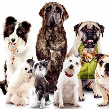 Dierenbescherming zoekt gastgezinnen voor honden