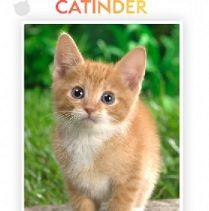 Een kat vinden via Catinder