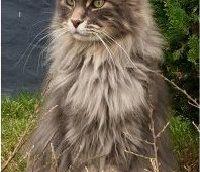 Dief houdt Heerlense kat in 'gijzeling'