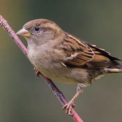 Vogelexcursie door centrum Heerlen