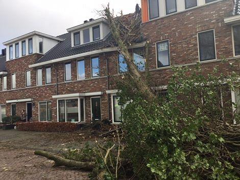 Gemeente kapt bomen