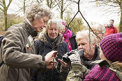 Themawandeling: boomknoppenwandeling op 10 februari
