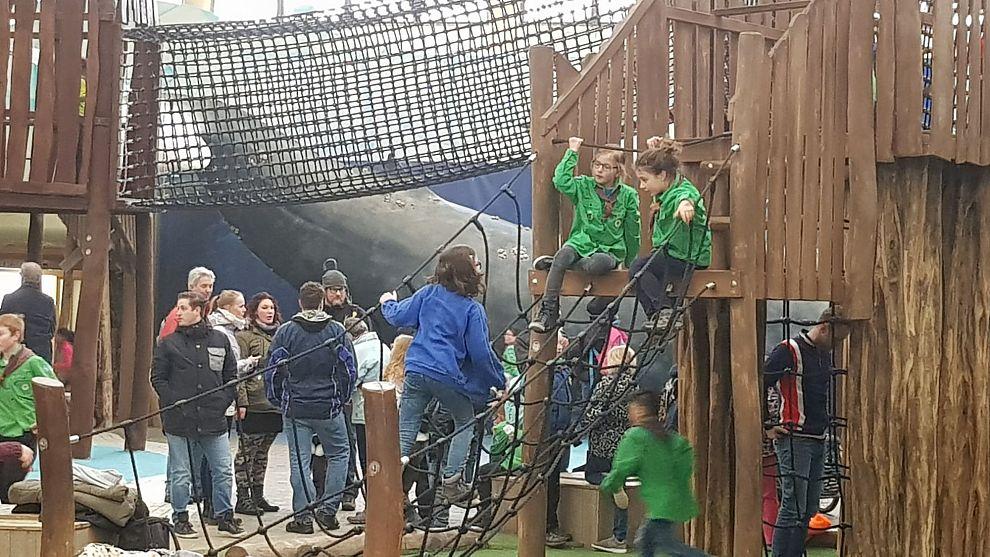 210 welpen in Rotterdamse Diergaarde Blijdorp