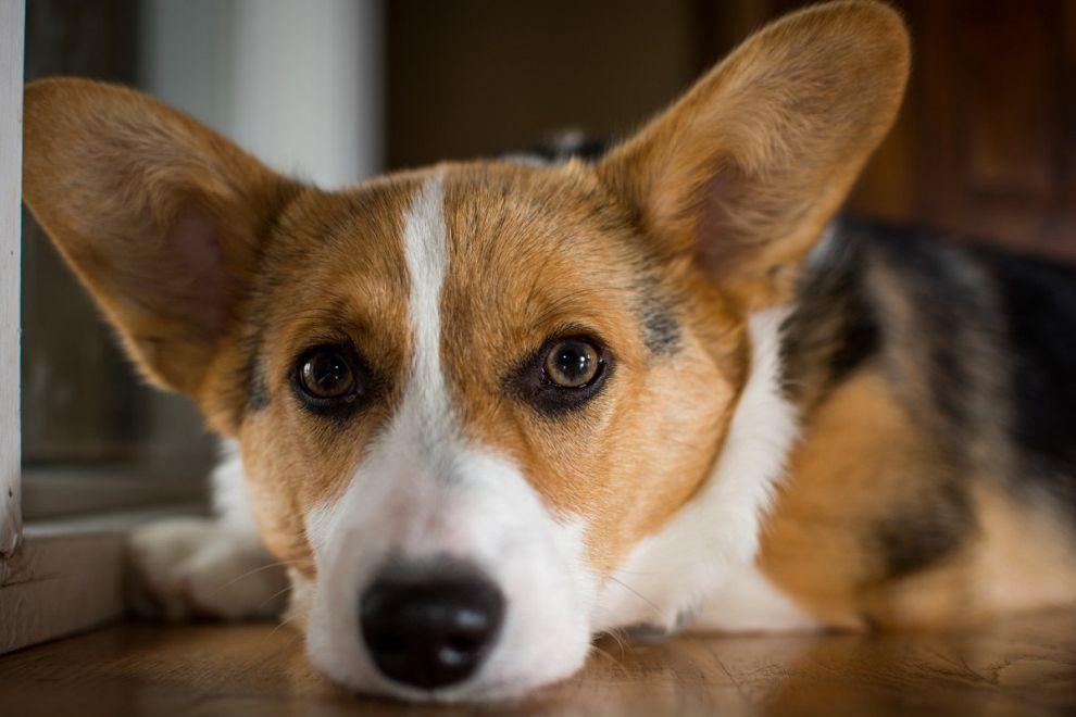 Maasssluis schaft hondenbelasting af