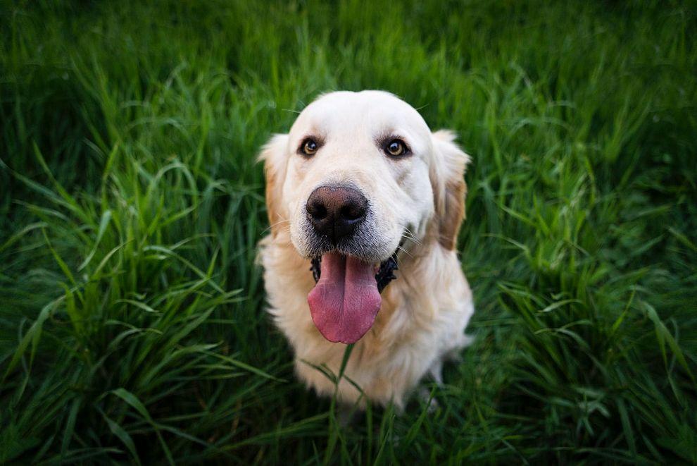 Opnieuw controle op opruimplicht hondenpoep