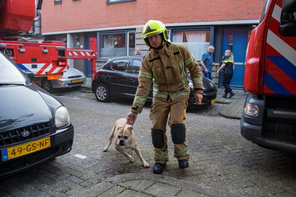 Brandweer redt drie honden uit woning
