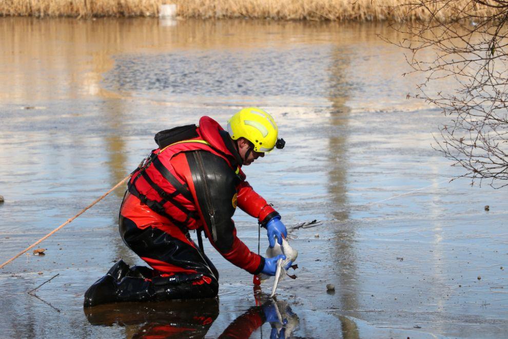 Brandweerman door het ijs om vogel te bevrijden