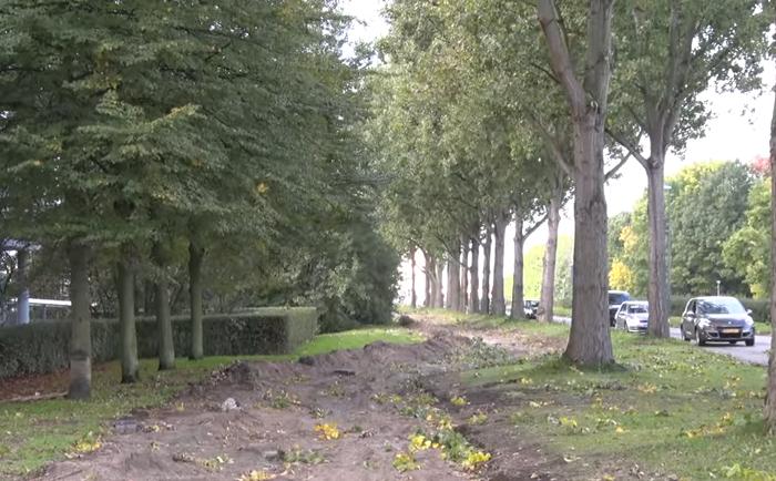 Bomen optimaal sparen bij verkeers- en bouwplannen