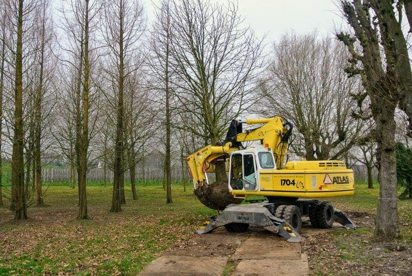 Bomen Straussplein machinaal verplaatst
