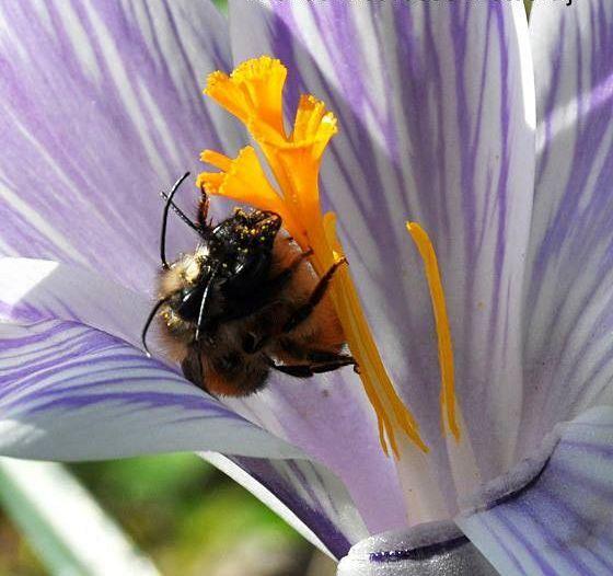 Imkers zoeken hulp voor bijen